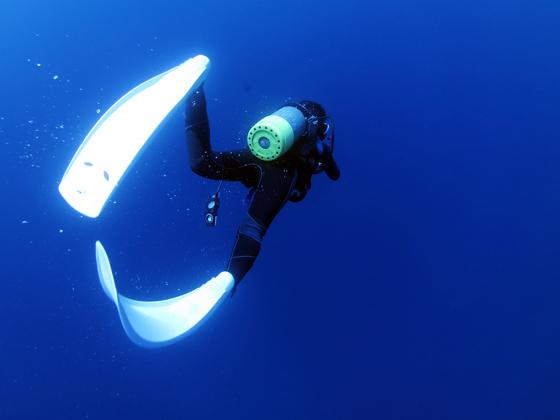 バラクーダ フィン ダイビング