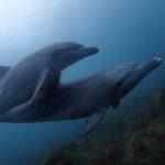 初島 イルカ ダイビング