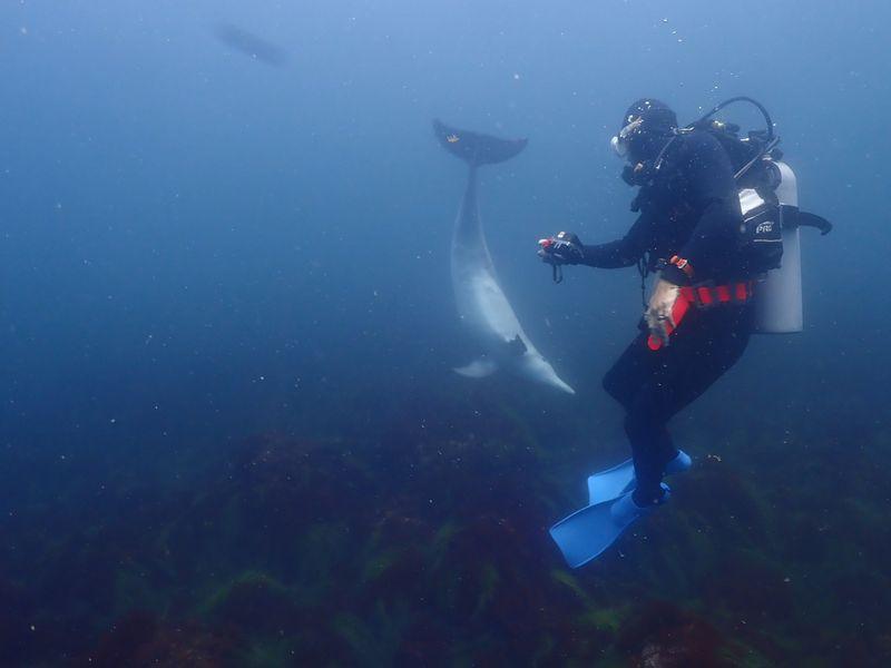 初島 イルカ ダイビング シーフロント