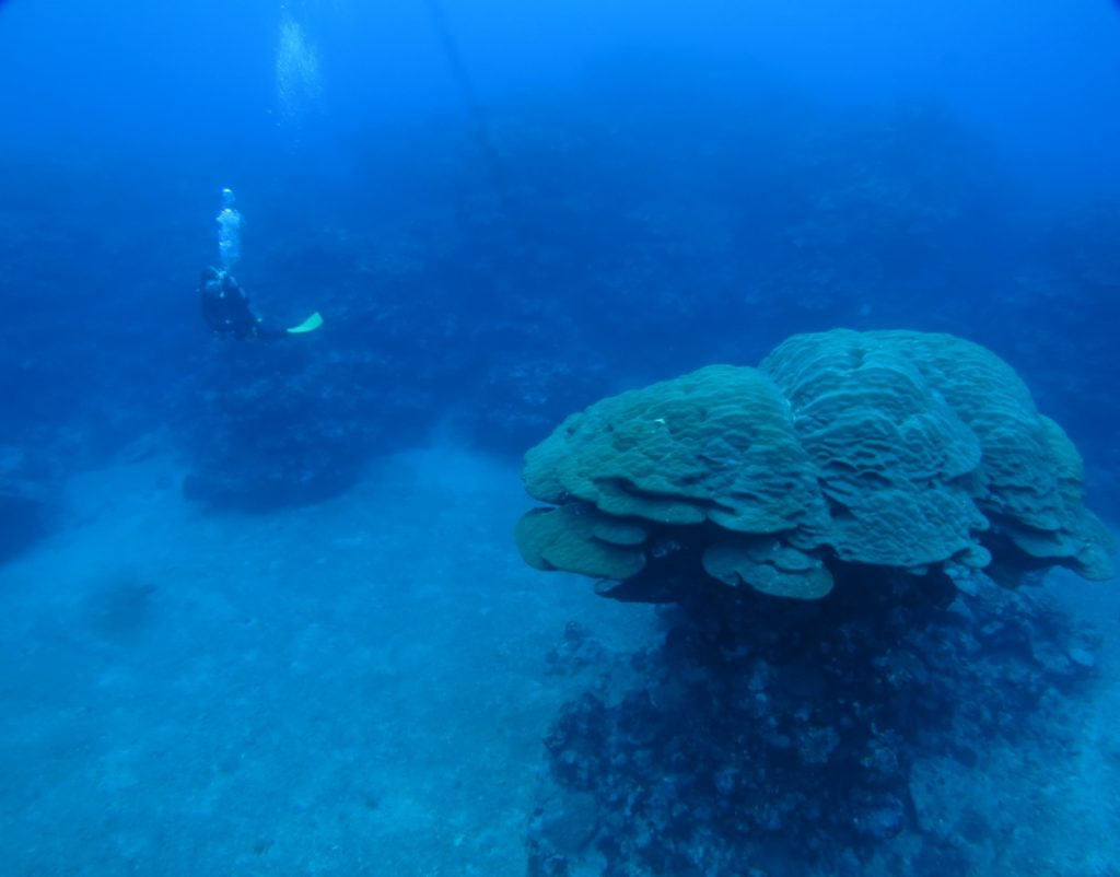 久米島 珊瑚
