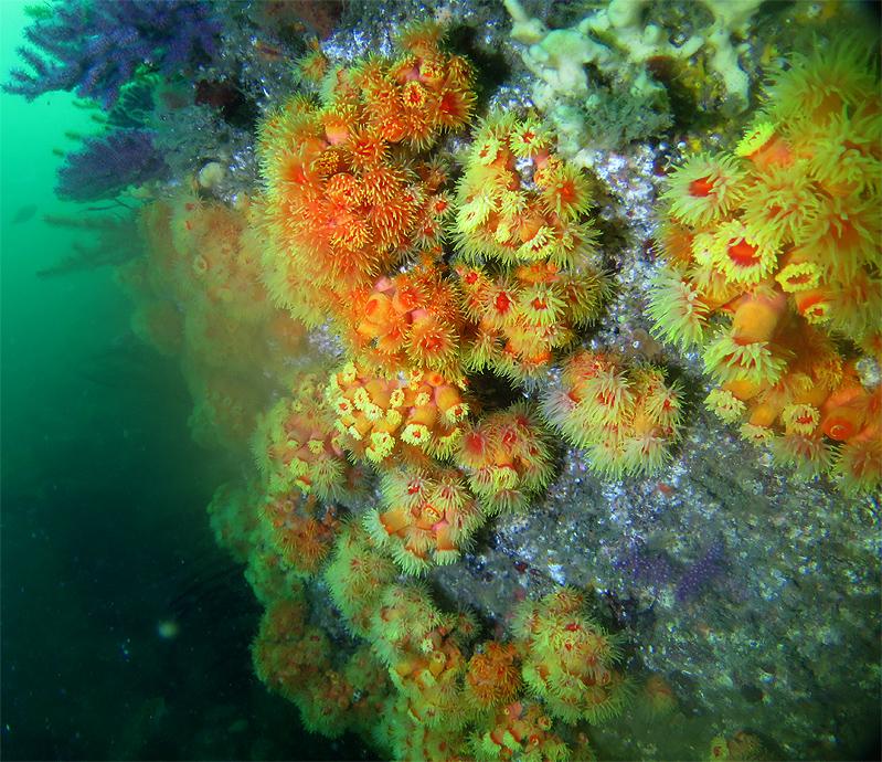 逗子 ダイビング サンゴ