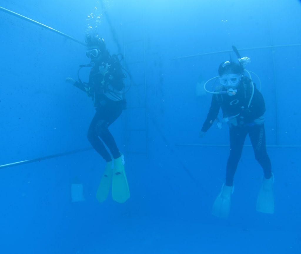 ダイビング 神奈川 中性浮力 トレーニング