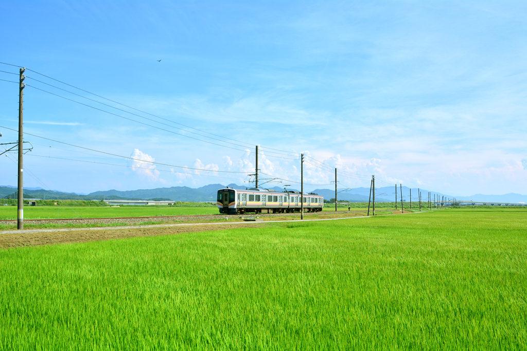 新潟 田んぼ 電車