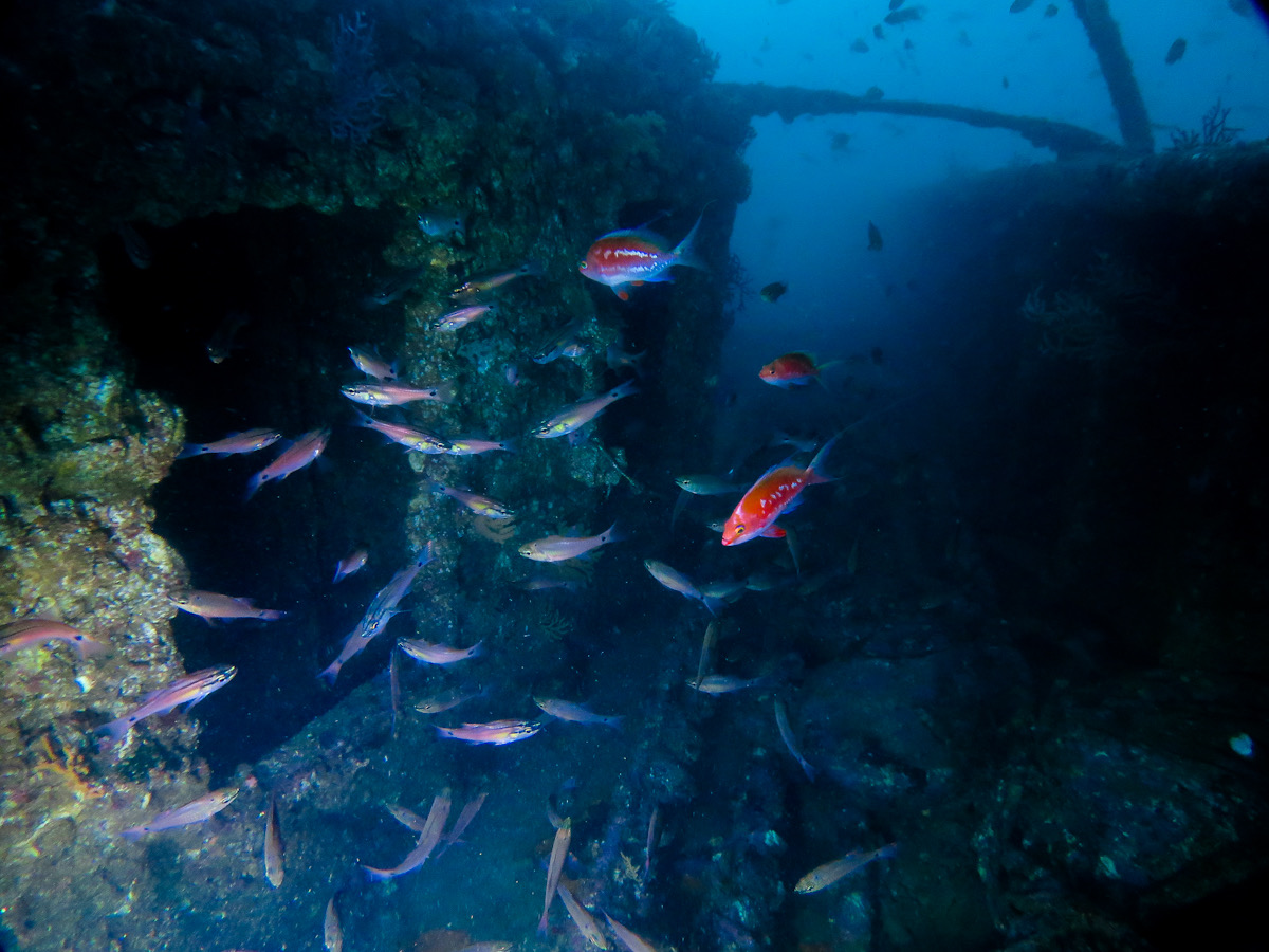 熱海 沈船 ダイビング