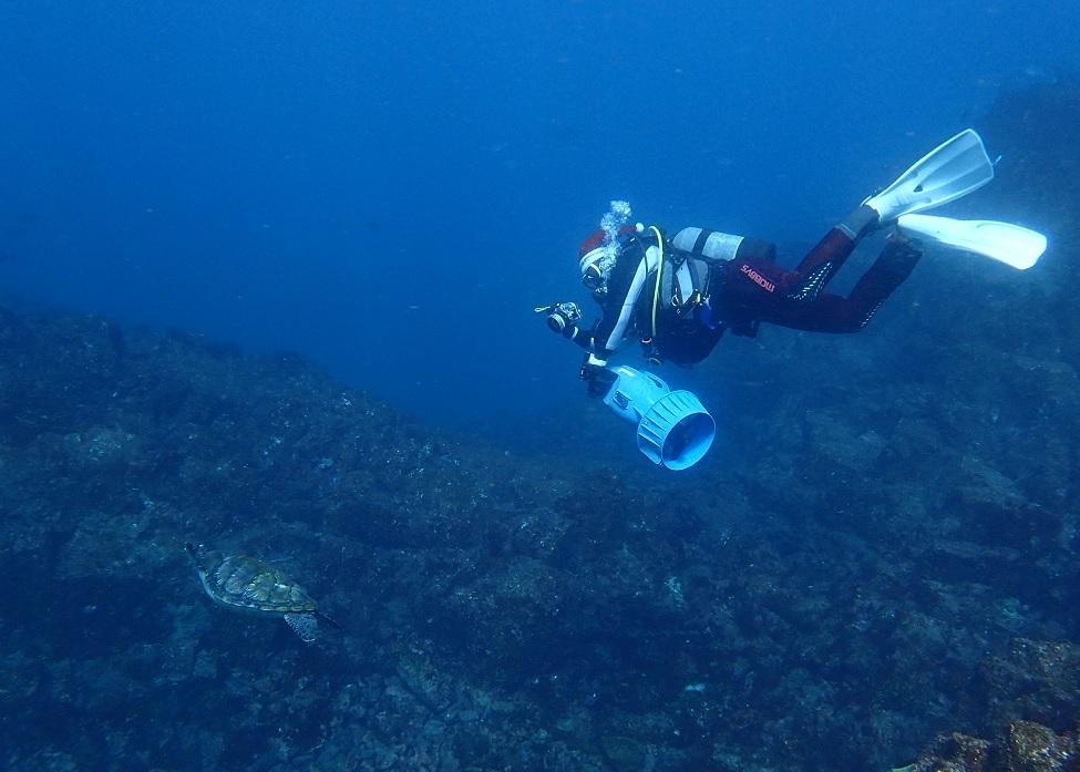 水中スクーター PADI 講習 SPコース ウミガメ