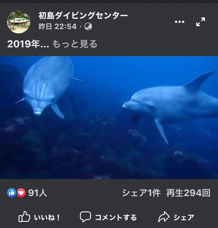 初島 イルカ