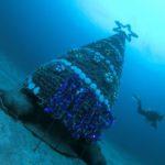伊豆海洋公園 ダイビング クリスマスツリー