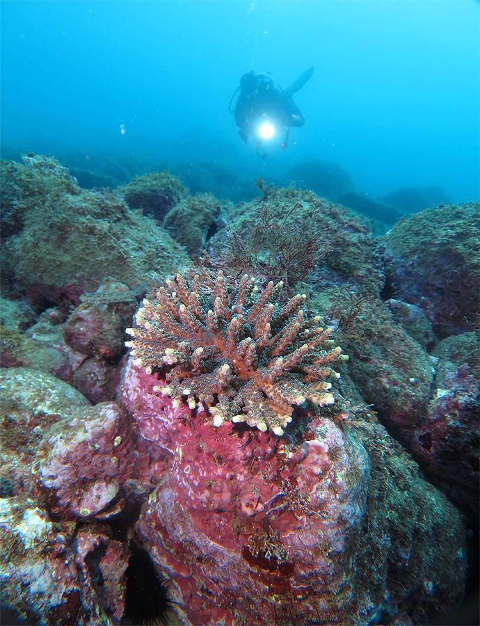 福浦 ビーチ ダイビング サンゴ