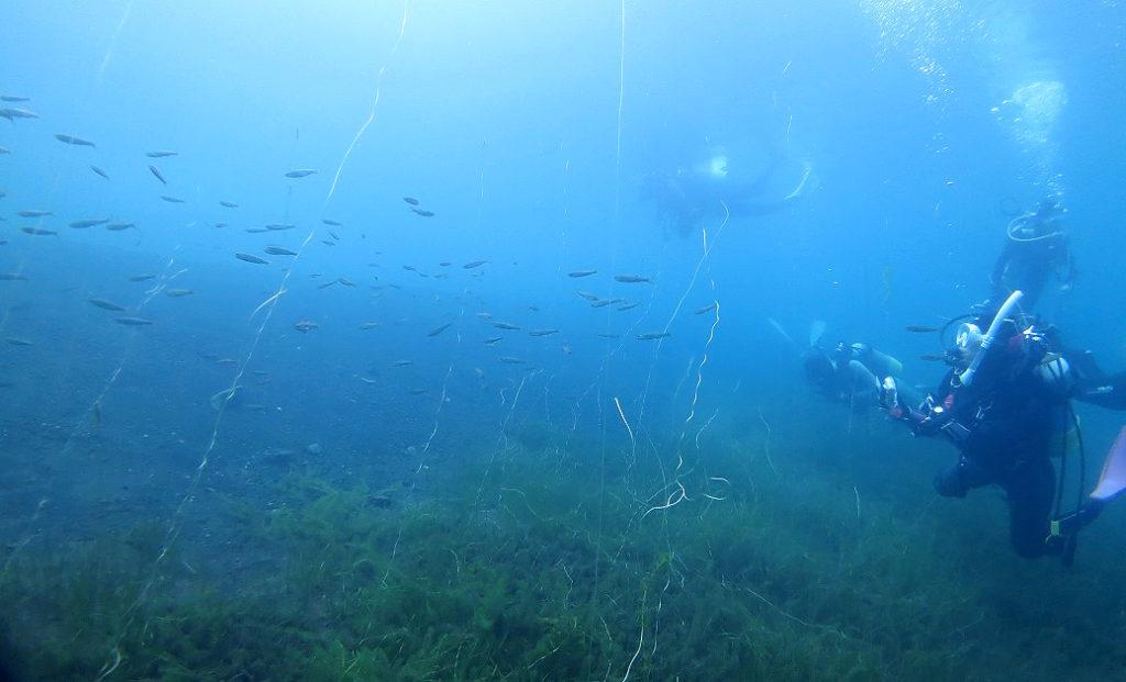 本栖湖 ダイビング 高所潜水 PADI アルティチュード