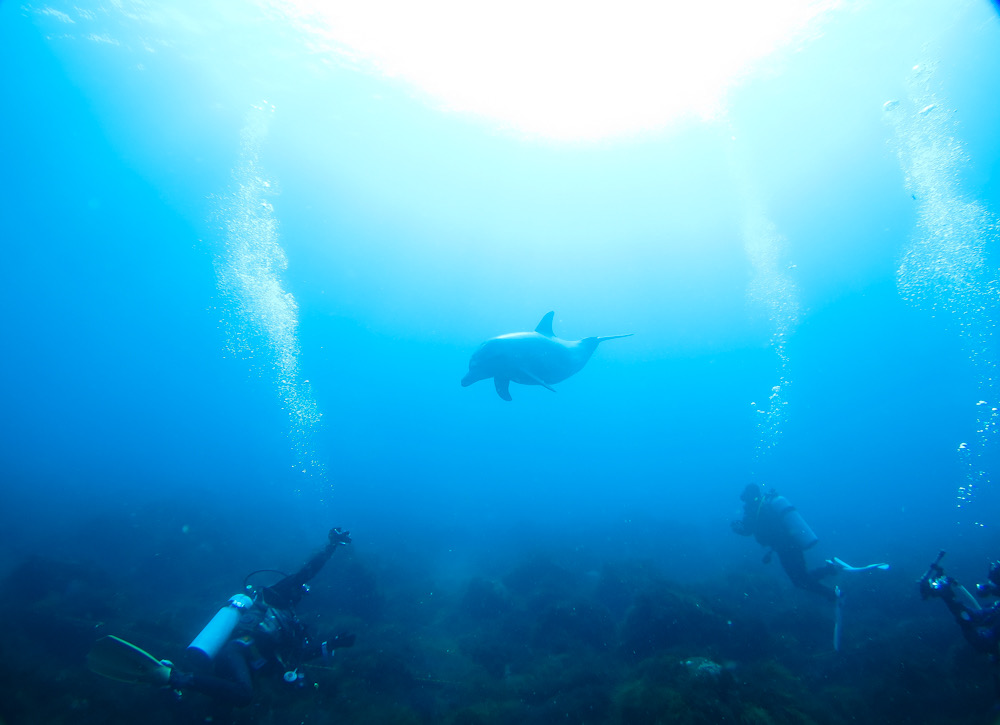 初島 ダイビング