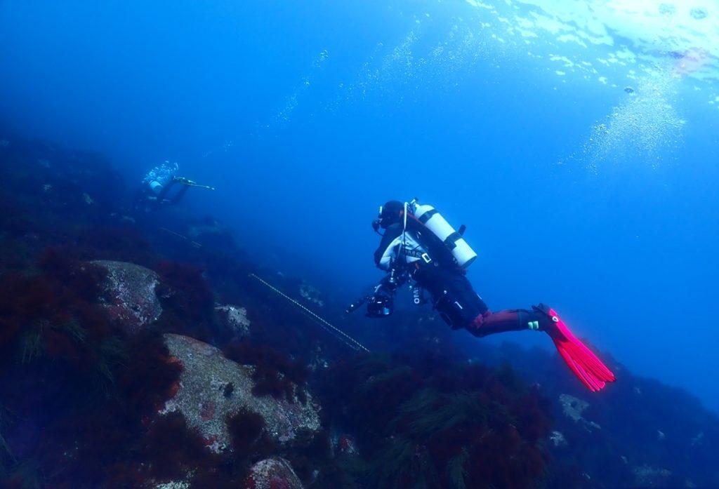 初島 ダイビング ニシマト イルカ