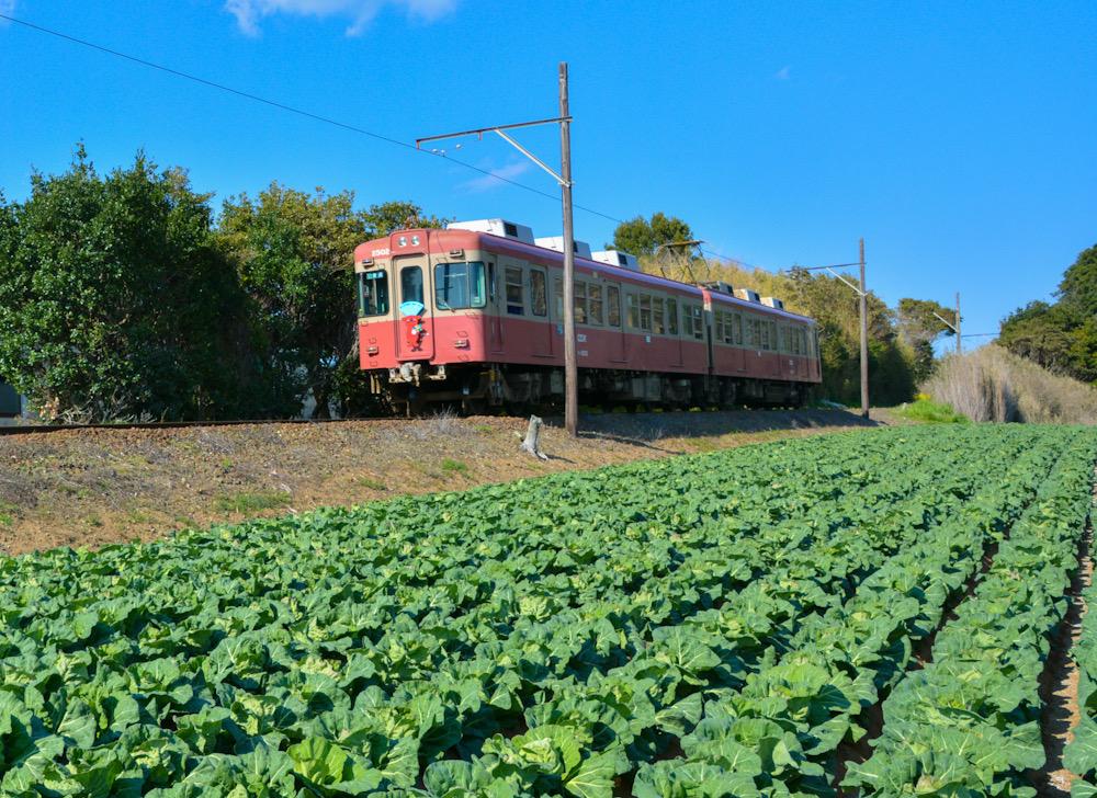 銚子鉄道 千葉 キャベツ畑