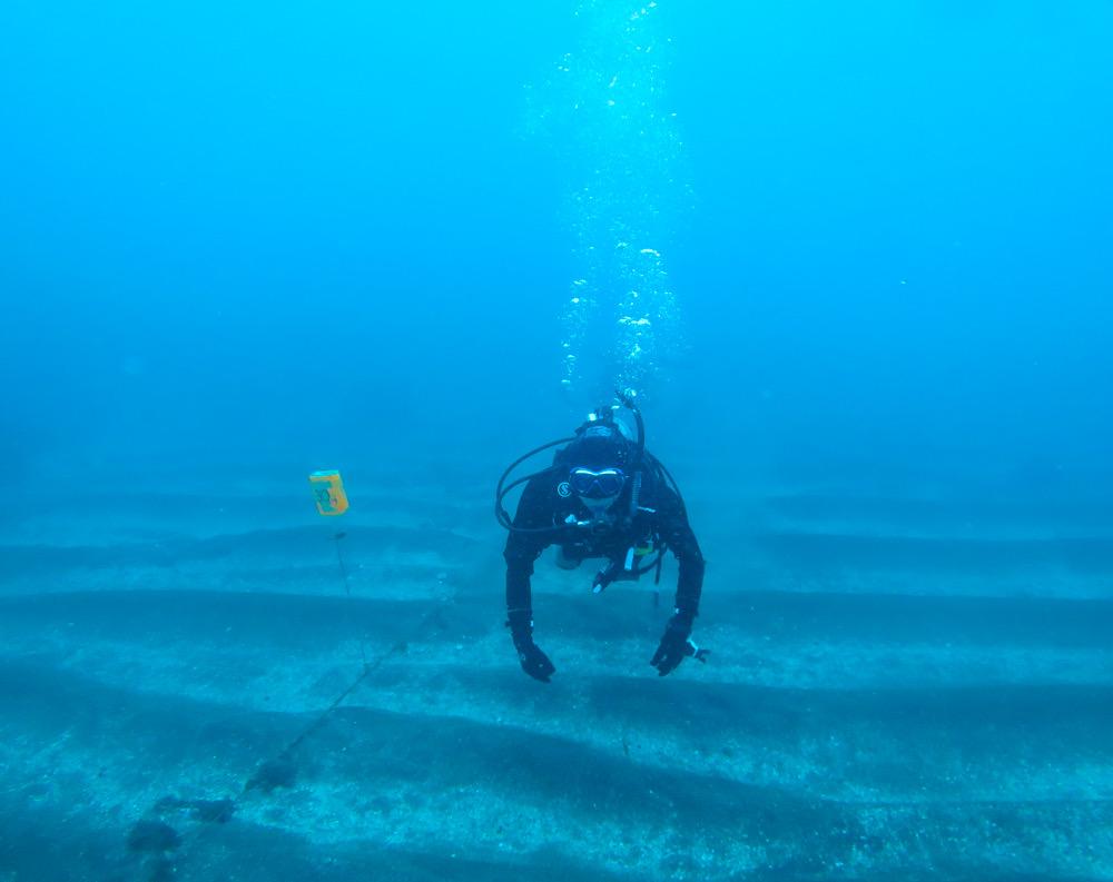 岩 ダイビング ダンゴウオ