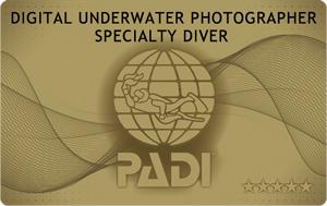 水中写真 SP PADI カード