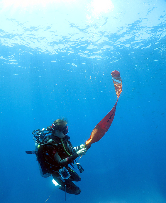 ダイビング フロート サーフェスマーカーブイ 上げ方