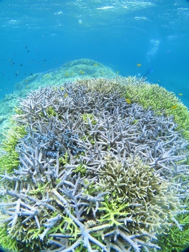 沖縄 サンゴ 珊瑚 ダイビング
