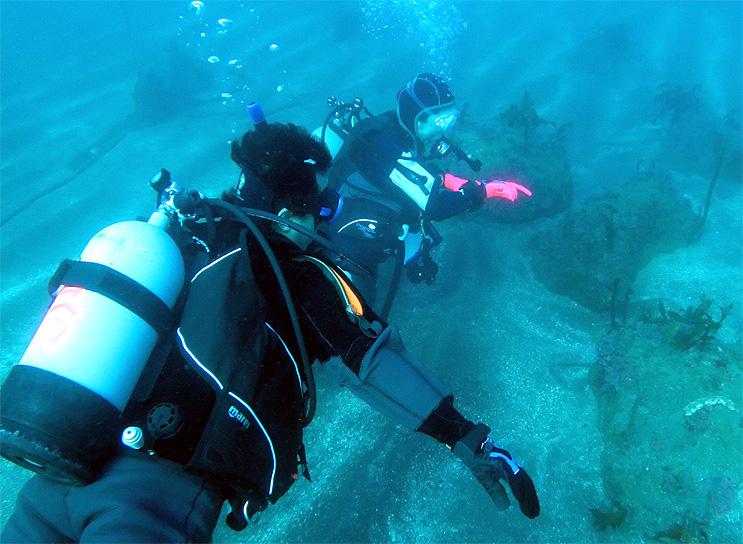 ガイド ツアー ダイビング 水中