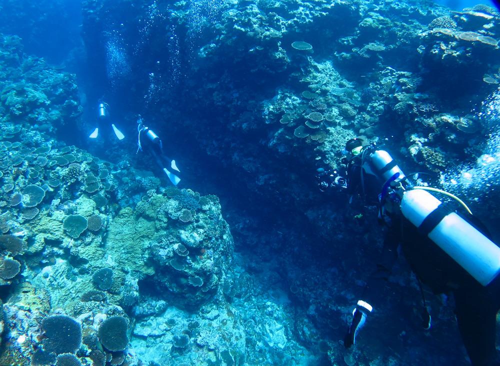 ダイビング 西表島 神奈川 ツアー サンゴ 水路 鳩間島