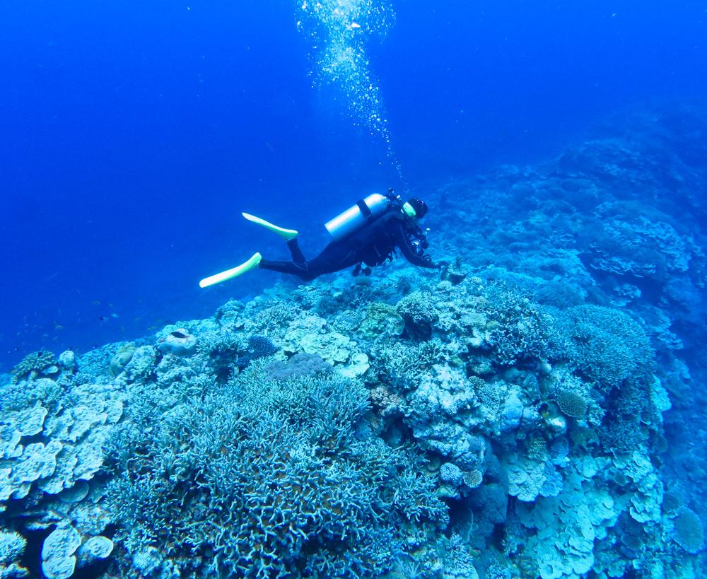 ダイビング 西表島 神奈川 ツアー サンゴ