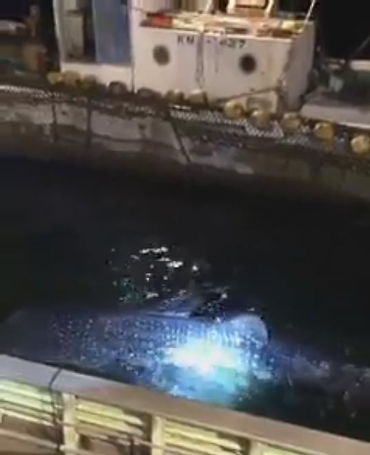 真鶴半島 岩 ジンベイザメ ダイビング