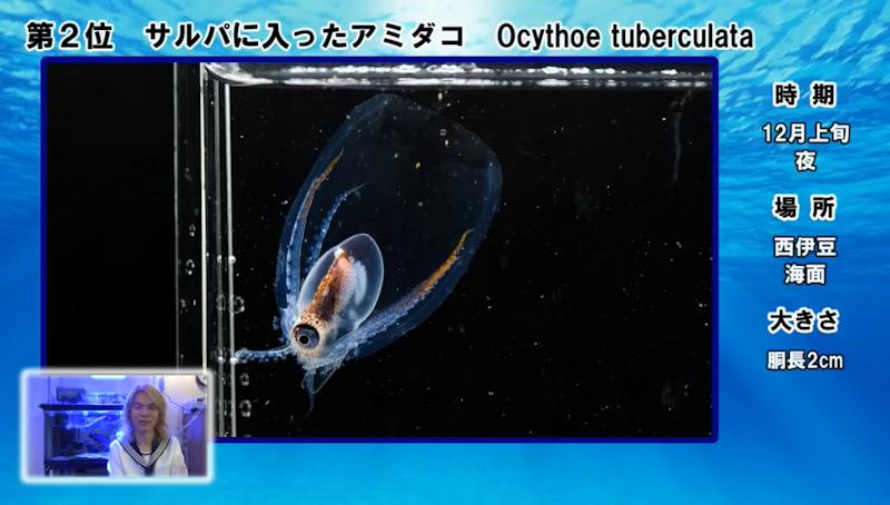 岸壁採取 伊豆 ブラックウォーター 稚魚 プランクトン