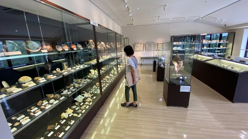 真鶴 貝 博物館 遠藤