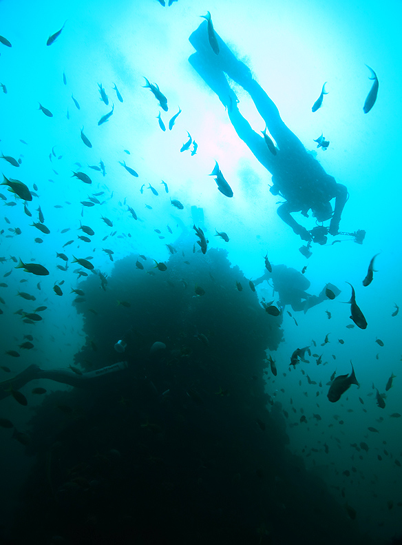 田子 ダイビング 沖の浮島根
