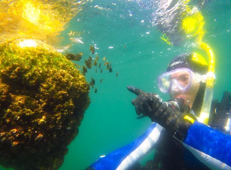 岩 ダイビング 水中写真撮影