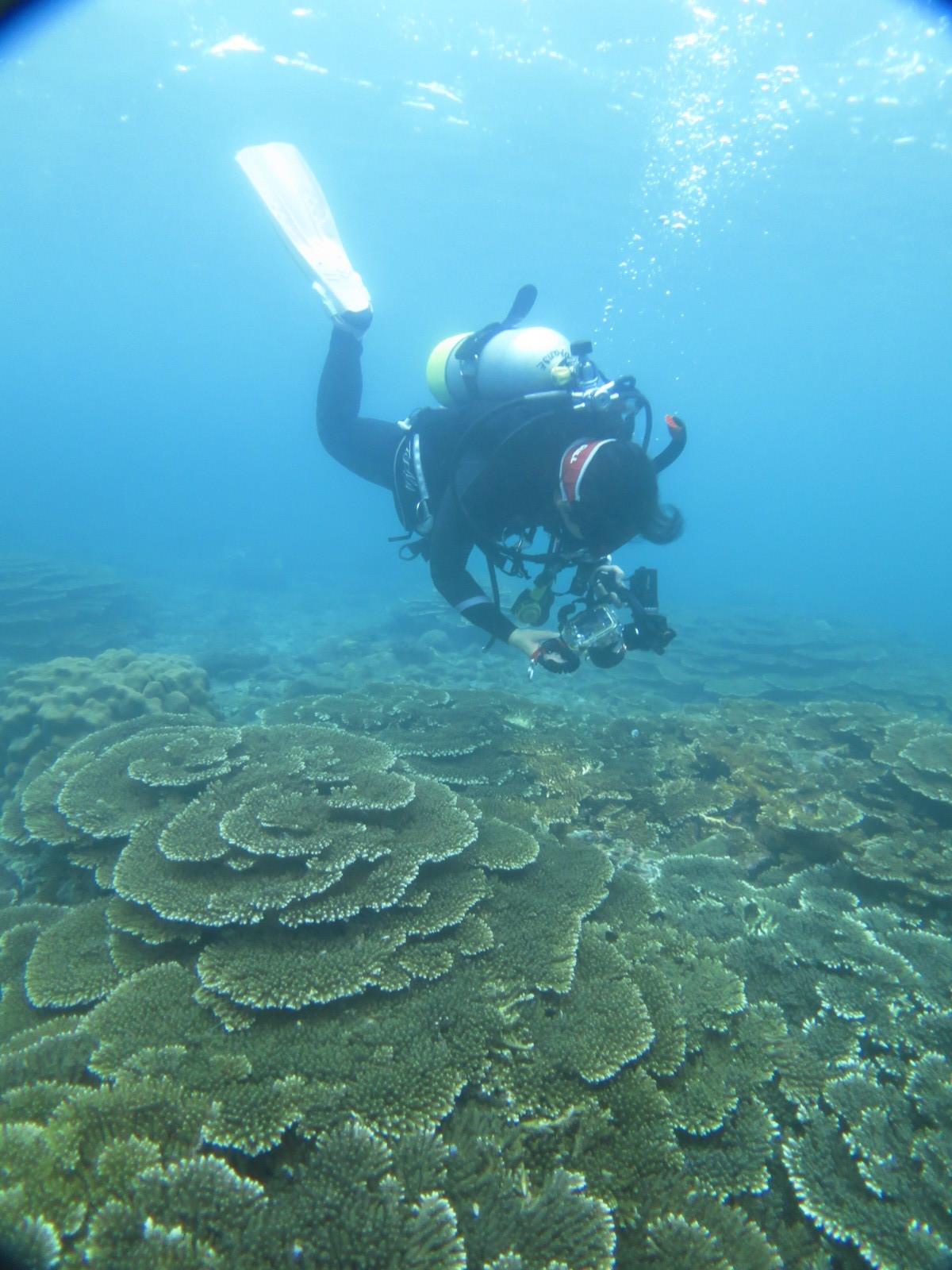 串本 赤鯱前 ビーチ サンゴ