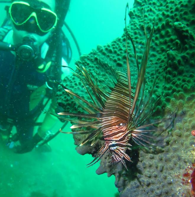 岩 ハナミノカサゴ ダイビング 真鶴
