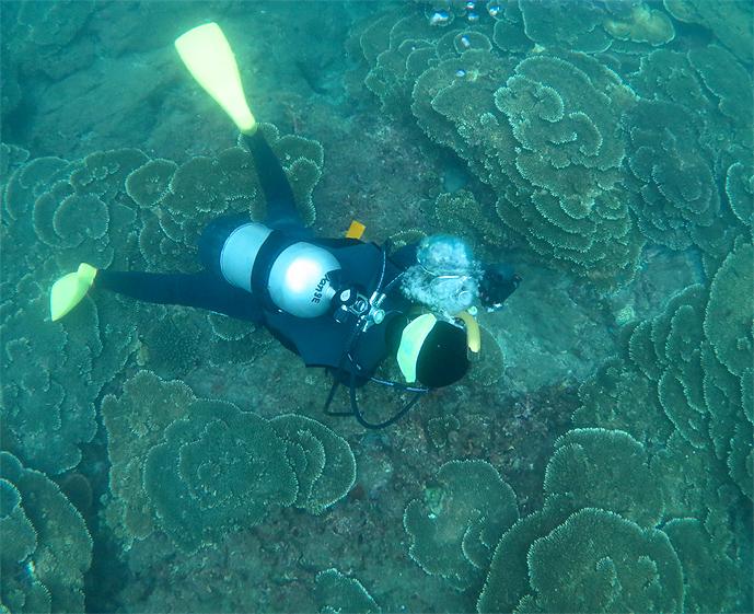 串本 ダイビング ビーチ サンゴ