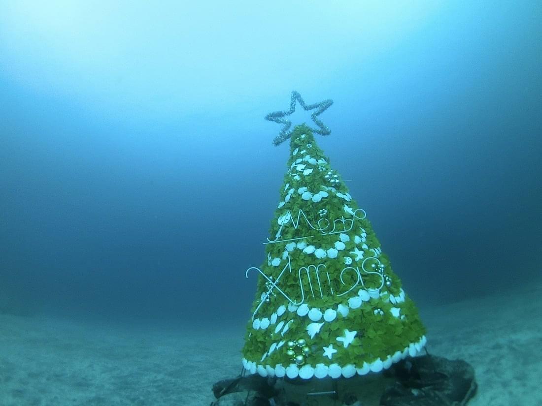 伊豆海洋公園 クリスマスツリー