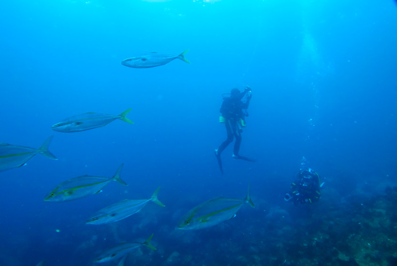 伊豆海洋公園 ダイビング カンパチ イワシ