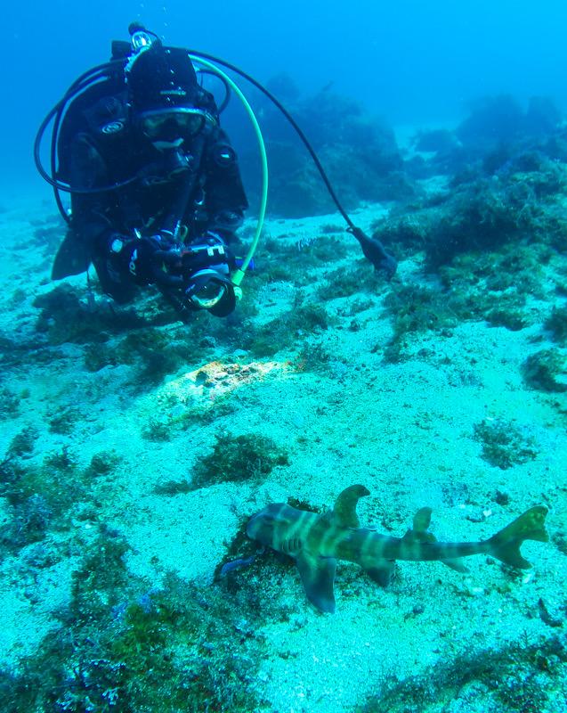 初島 ダイビング ネコザメ