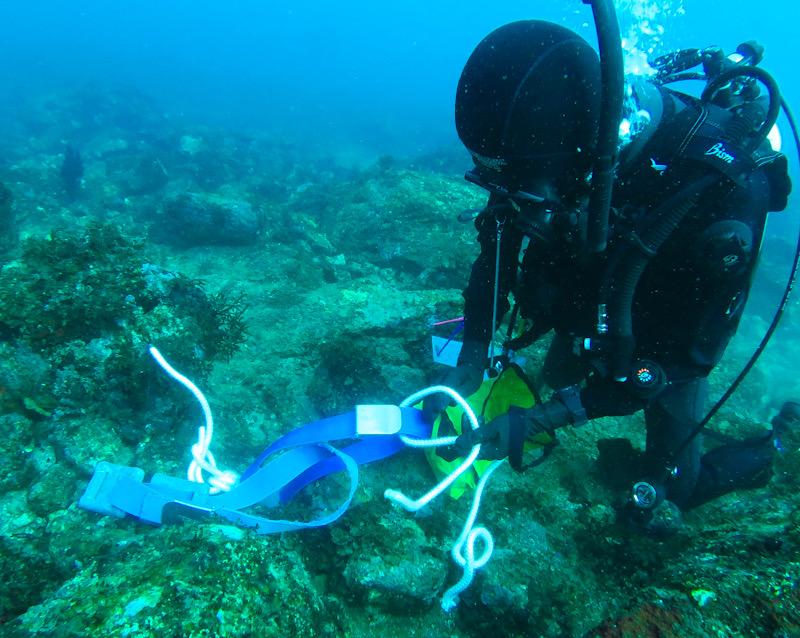 PADI サーチアンドリカバリー ダイブマスター ダイビング ロープワーク
