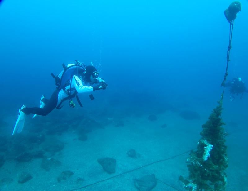 ダイビング 中性浮力 神奈川県 PADI ホバリング