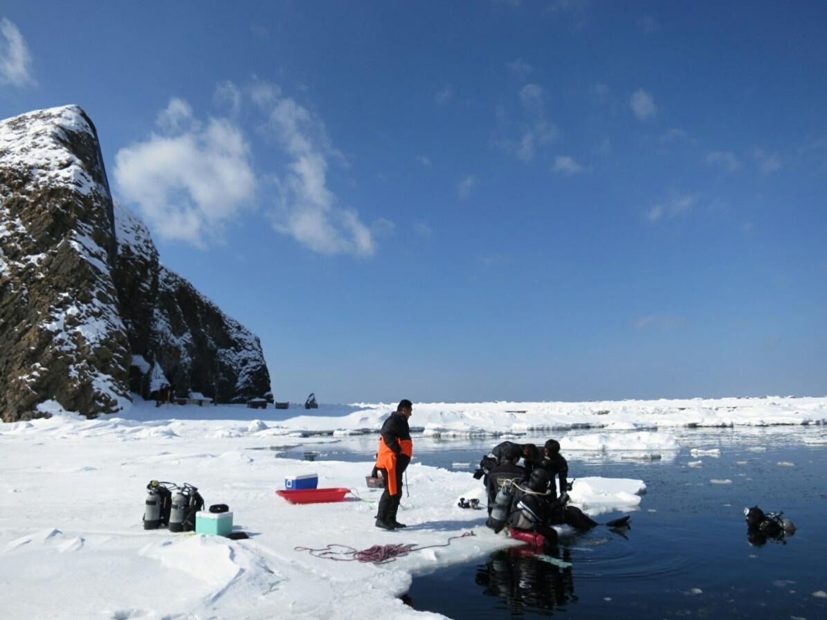 流氷 ダイビング 北海道 PADI アイスダイビング