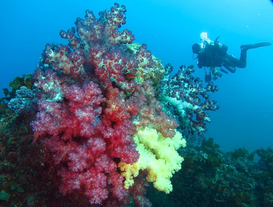 江の浦 ボートポイント ダイビング 無限城