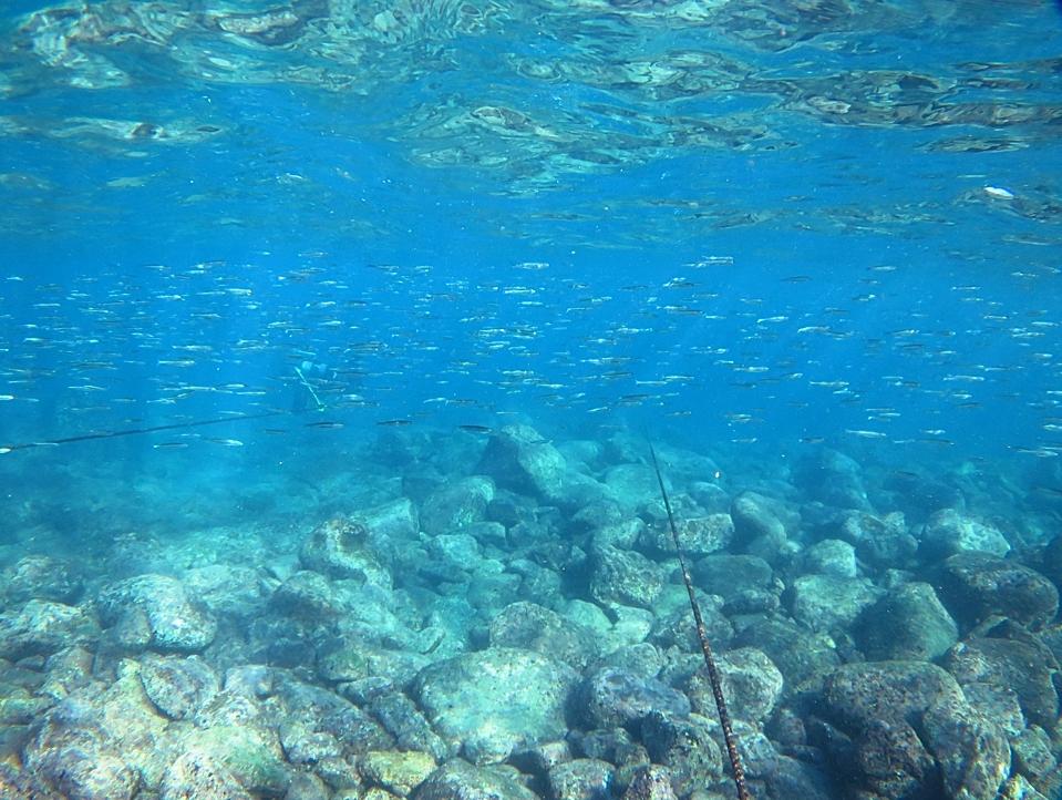 江の浦 ダイビング ビーチポイント 生物情報
