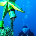 江の浦 ダイビング 中性浮力 講習 ニジギンポ