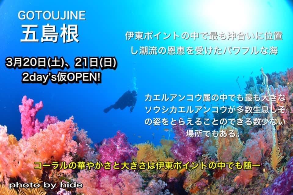 五島根 伊東 ダイビング