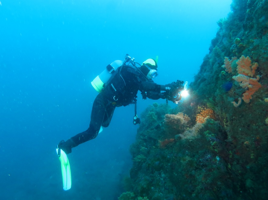 逗子 ダイビング オオタカ根 水中写真