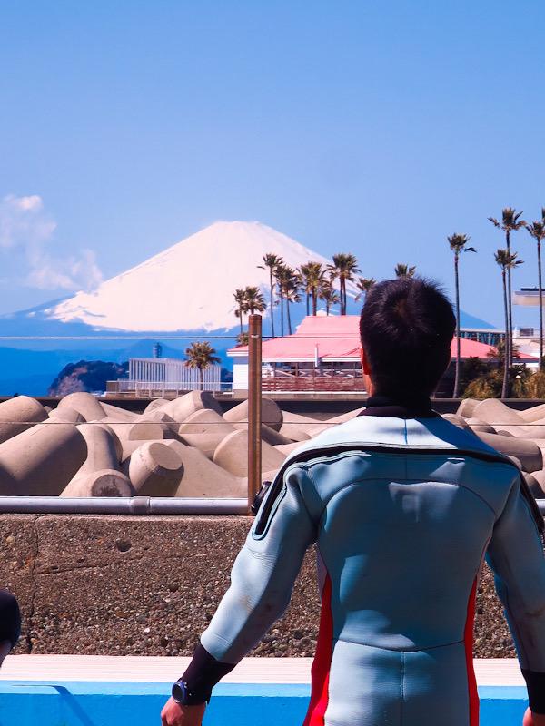 富士山 逗子 ダイビング