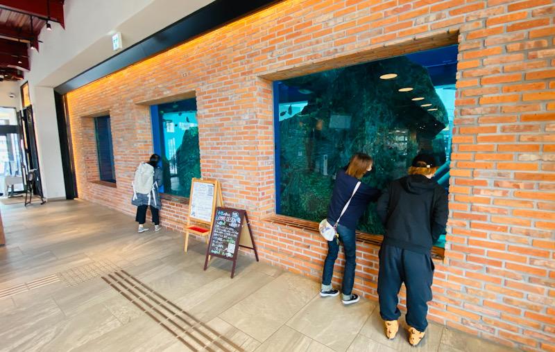 水槽 ダイビング 千葉 水族館