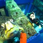 水槽 ダイビング 千葉 水族館 ウミガメ