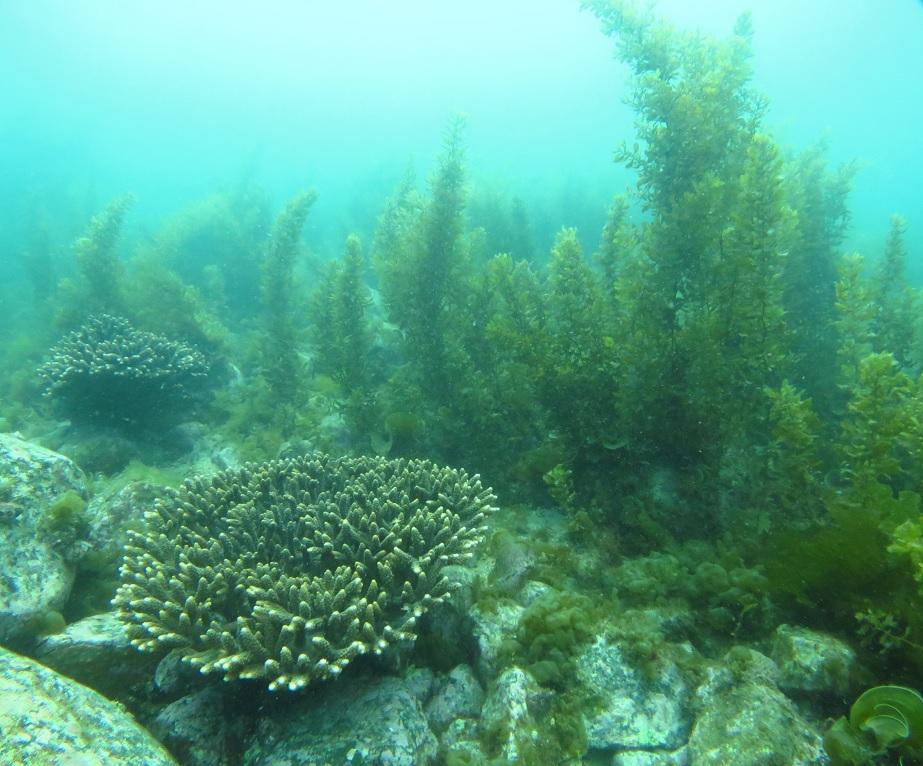 西伊豆 平沢 ダイビング サンゴ