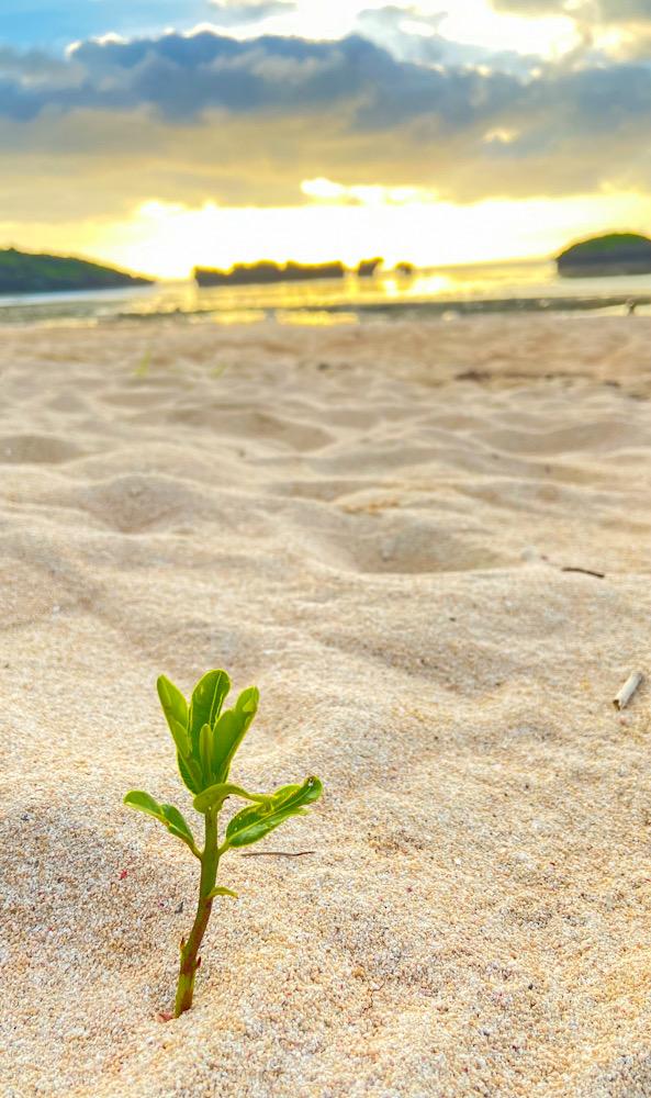 西表島 星の砂ビーチ