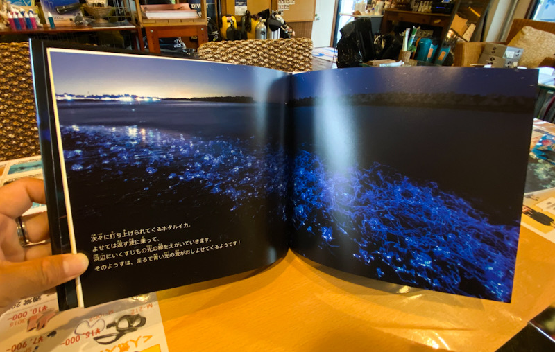 ホタルイカは青く光る