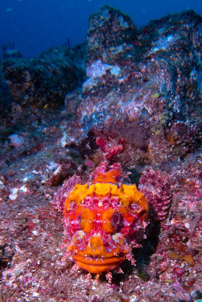 熱海 ダイビング