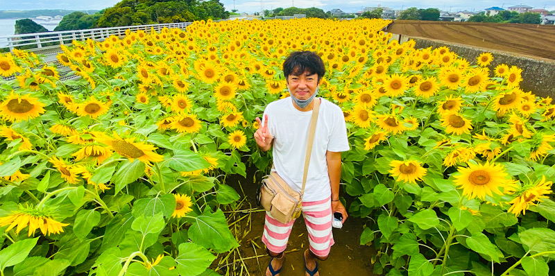 神奈川 三浦 ひまわり畑